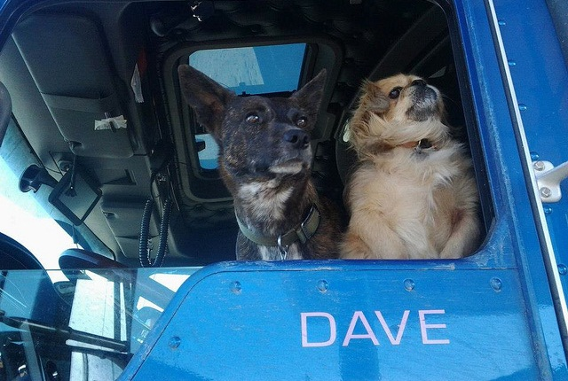 Bear, a Pekinese (right) that might not have lived except for a trucker's kindness, traveled with Izzy, a Blue Healer mix, to settle with a new family in Alaska.