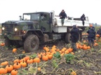 Workers at The Pumpkin Patch in Oregon load the orange orbs aboard a M923  5-ton truck. All-wheel drive works well in mud. Photos: Bob Eggar