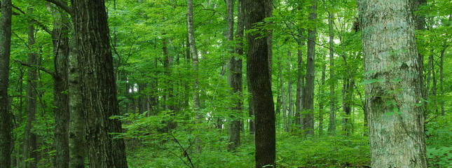 Hardwood forests now cover 65.7 million acres in 12 states in the eastern U.S., an increase of 300,000 acres since 2007.