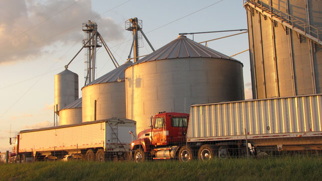 Harvest-service rigs with hopper-bottom trailers pause at sunset along U.S. 23 in northwestern Ohio. Tomorrow they'll resume working, hauling grain that eventually will arrive at far-away markets. (Photo by Tom Berg)