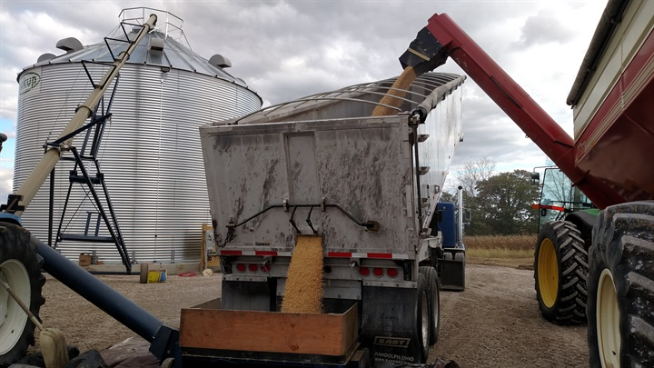 Soybeans move from Killbros field cart (right) into East end dump and