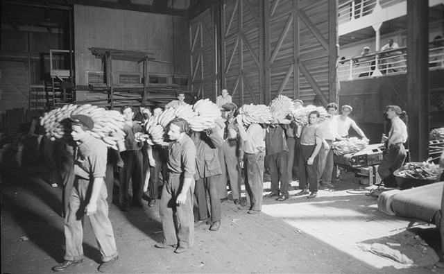 In 1937, longshoremen at ports in New York transfer bananas from a conveyor that carries them from the hold of the ship onto the dock and then load them into freight cars. Source: U.S. National Archives and Records Administration