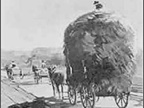 A mule-drawn wagon stacked high with hay has easy going on a 19th
