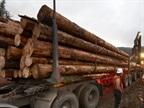 Oregon Timber Haulers Seek Rest Break Exemption