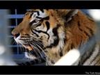 Tony the Truckstop Tiger has to Go