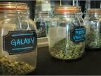 Legal Marijuana Tied to Crash Increase