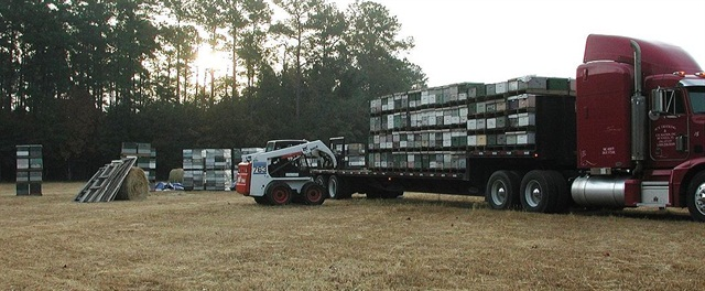 Loading bees for transport from South Carolina to Maine to pollinate blueberries. Photo by Pollinator via Wikimedia Commons