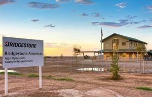 The Bridgestone research farm started growing guayule for research use in spring of 2013. This year's fall planting will provide the first biomass to the BioRubber Process Research Center for tire evaluation in mid-2015.