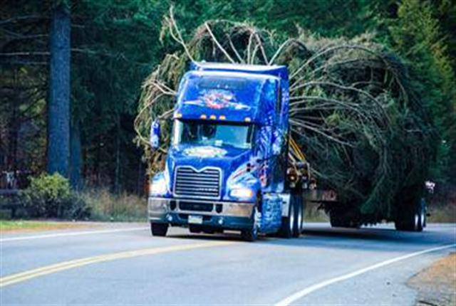 The 2013 U.S. Capitol Christmas tree was harvested from the Colville National Forest in Washington State to begin its multi-state trek to Washington, D.C. with the help of a 2014 Mack Pinnacle model truck.