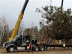The Capitol Christmas Tree being loaded onto a trailer. Photo via Kenworth.
