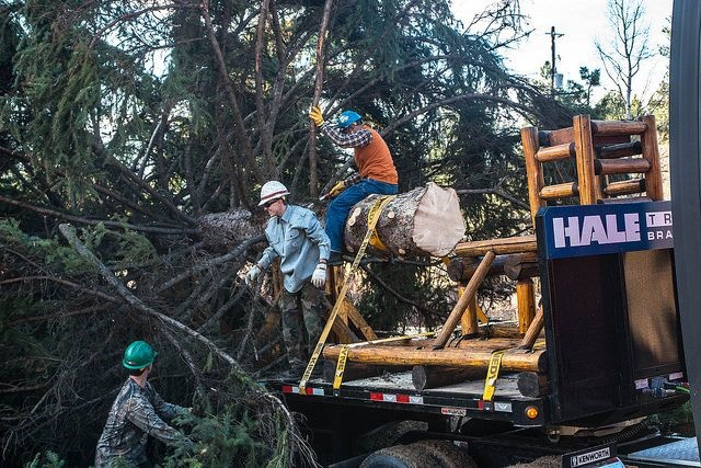 Payette National Forest workers trim branches from the base of the