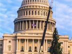 Workers set up the U.S. Capitol Christmas Tree on the west lawn of the