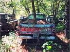 Truck bed to tree bed. Photo: Christina Hamner
