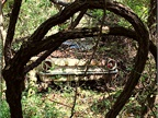 An old Ford in the trees. Photo: Christina Hamner