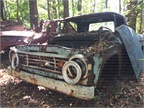 A pop-eyed Dodge pickup sits quietly in the woods. Photo: Jack Roberts