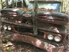 This mid-60s Chevy truck has sat so long a tree has grown through its